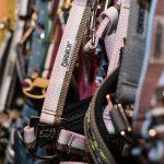 Halfter für Pferde in allen Größen, Reitsport Toscaninihof Salzburg, Pferde, Reiter, Reiten