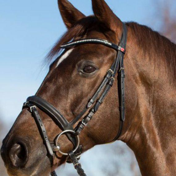 Zaumzeuge die qualitativ überzeugen, Reitsport Toscaninihof Salzburg, Reiten, Pferde, Pferdekopf